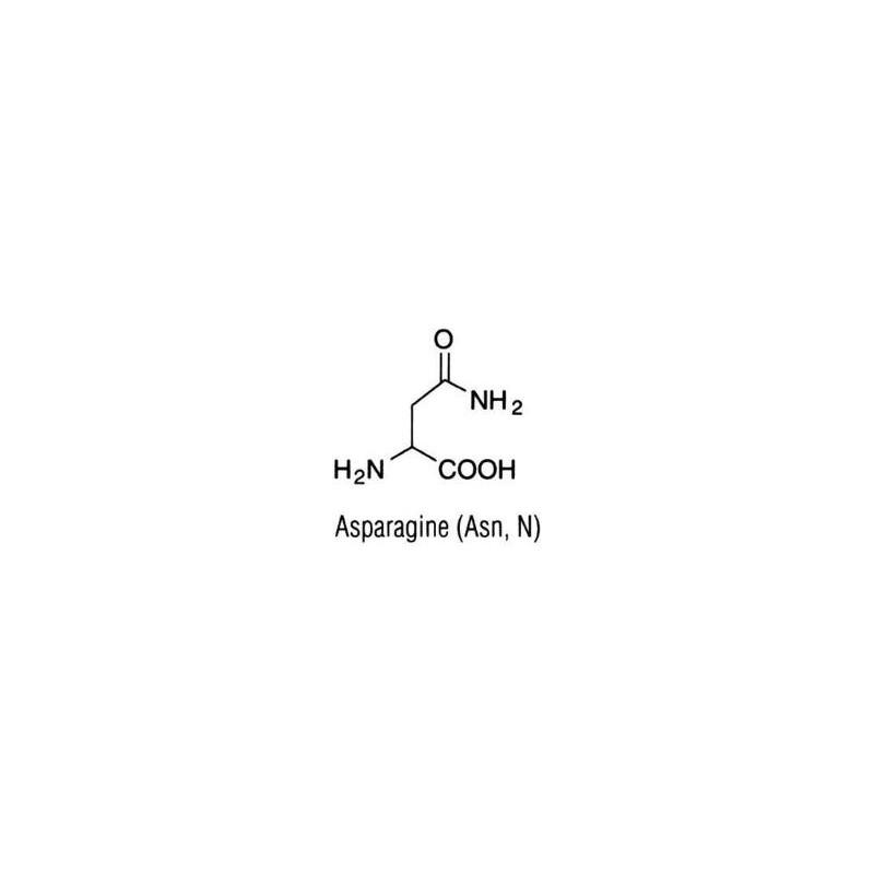 L-Аспарагин безводный, 100гр